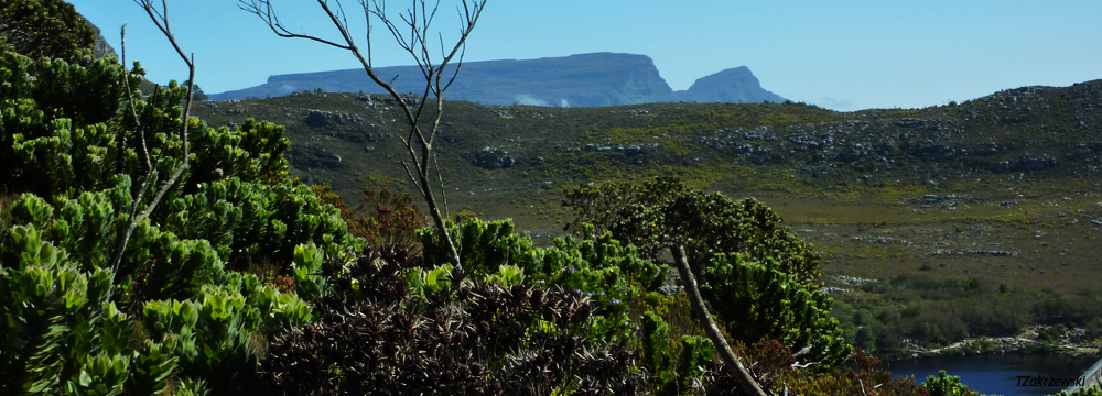 Hoerikwaggo Trail view to Table Mountain