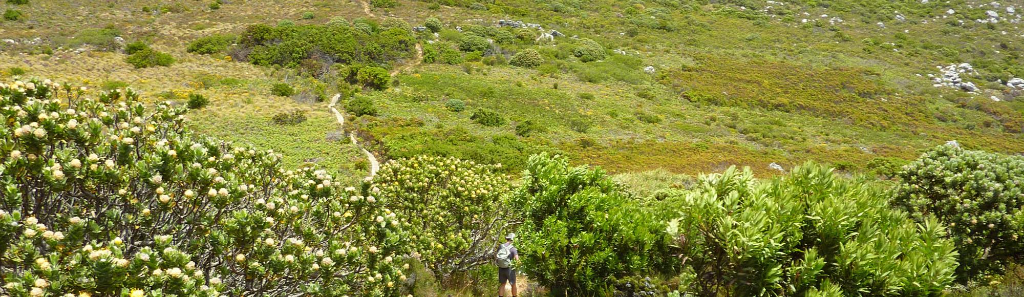 Table Mountain hike 01i